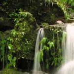 Trouver de l'eau en régions tropicales