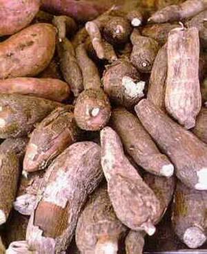 Le manioc
