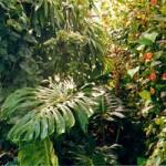 Les plantes tropicales comestibles