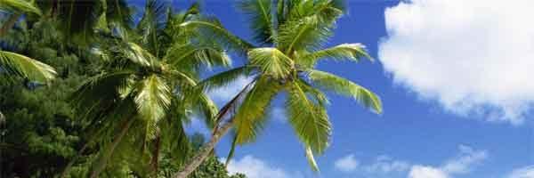 Arbres en zones tropicales