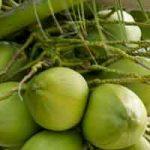Plantes comestibles en régions tropicales : le cocotier