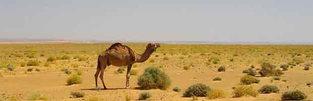désert aride