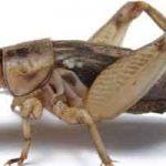 Nourriture de survie : les insectes