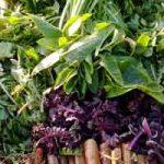 Plantes comestibles en régions tropicales : les légumes sauvages