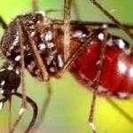 Les moustiques et la malaria