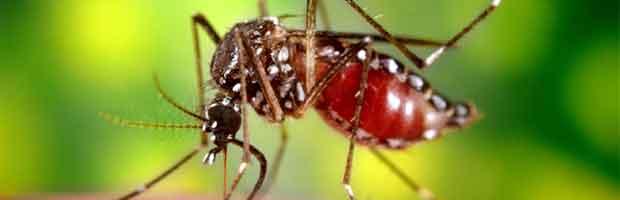 Moustiques et malaria