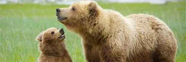 Ours et petit ours