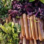 Comment déterminer si une plante est comestible