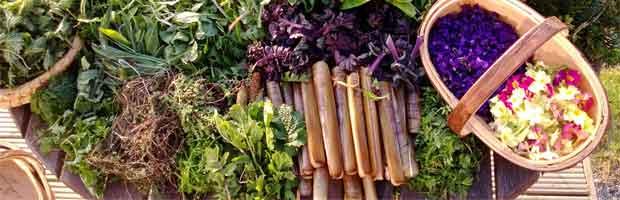 Reconnaître plantes comestibles