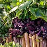 Comment préparer et cuisiner les plantes comestibles