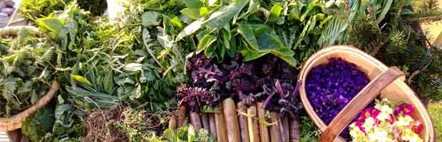 Préparer les plantes comestibles