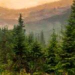 Comment s'orienter en s'aidant de la nature